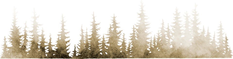 gold conifer trees